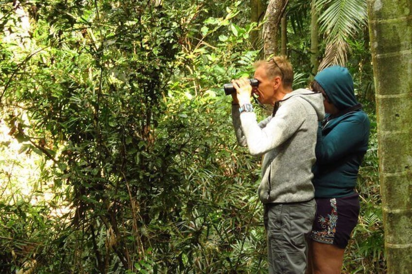 Looking for pademelon