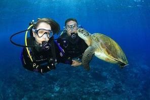 Gold Coast Try-Scuba Experience at Wave Break Island