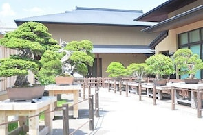 Private Tour - The BONSAI tour