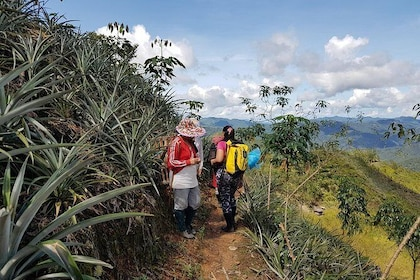 Discover the Natives of Mount Kinabalu