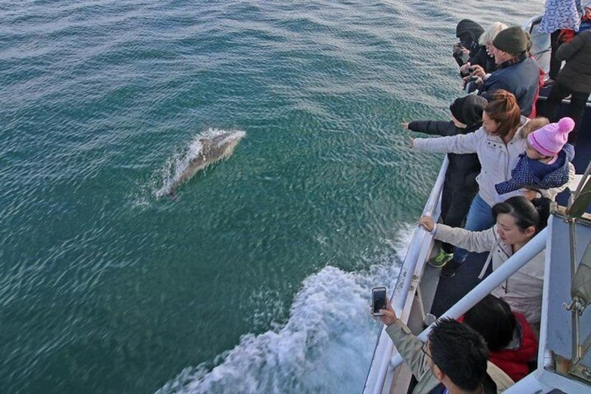 Common dolphins wave-riding alongside the boat