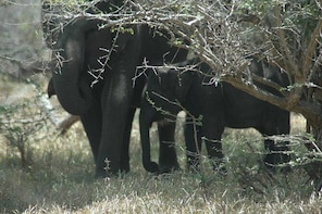 Full Day Safari Tours in Yala National Park