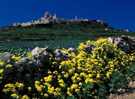 Mdina, Rabat, Dingli, San Anton, Ta'Qali & Mosta guided tour
