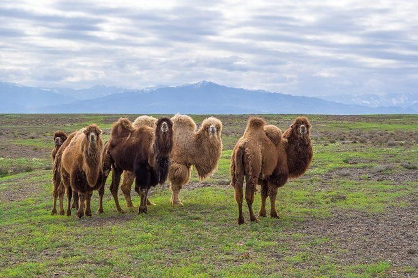 Show item 1 of 2. The Silk Road tour of Kazakhstan