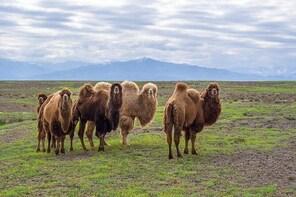 The Silk Road tour of Kazakhstan