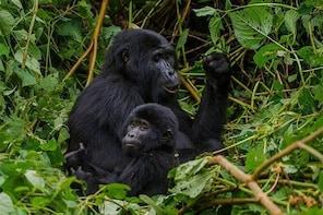 3 days gorilla trek in Uganda bwindi national park