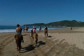 Horseback Riding on the Beach and Through a Coconut Plantation