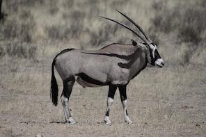 Kgalagadi Photographic Safari
