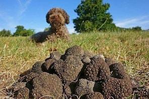 La Morra Truffle Hunting Experience
