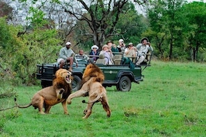 Private Shuttle Service from Johannesburg to Kruger National Park