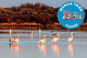 The Majestic Flamingo Tour - (2 hours, minimum of 2 passenger)