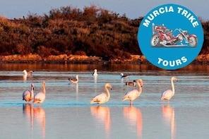 The Majestic Flamingo Tour - (2 hours, minimum of 2 passenger)