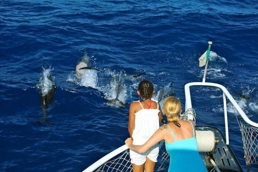 Waitukubuli Dolphin and Whale Watch in Dominica