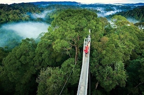 Monteverde Cloud Forest and Hanging Bridges Full-Day Tour from San Jose