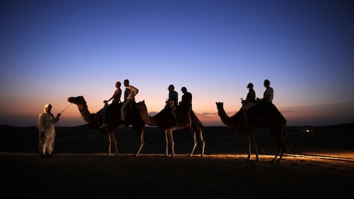 Arabic man leading 3 camels with people on them in Dubai