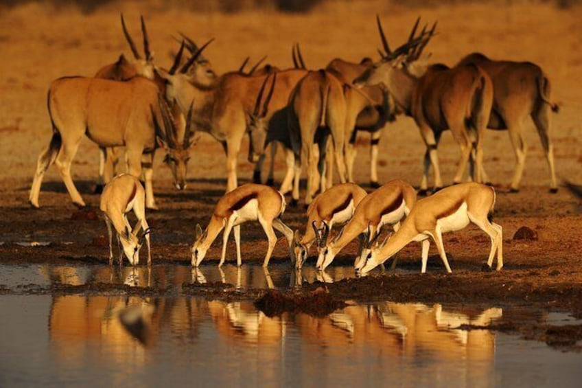 Show item 1 of 2. 5-Day Exclusive Namibia Tour from Windhoek