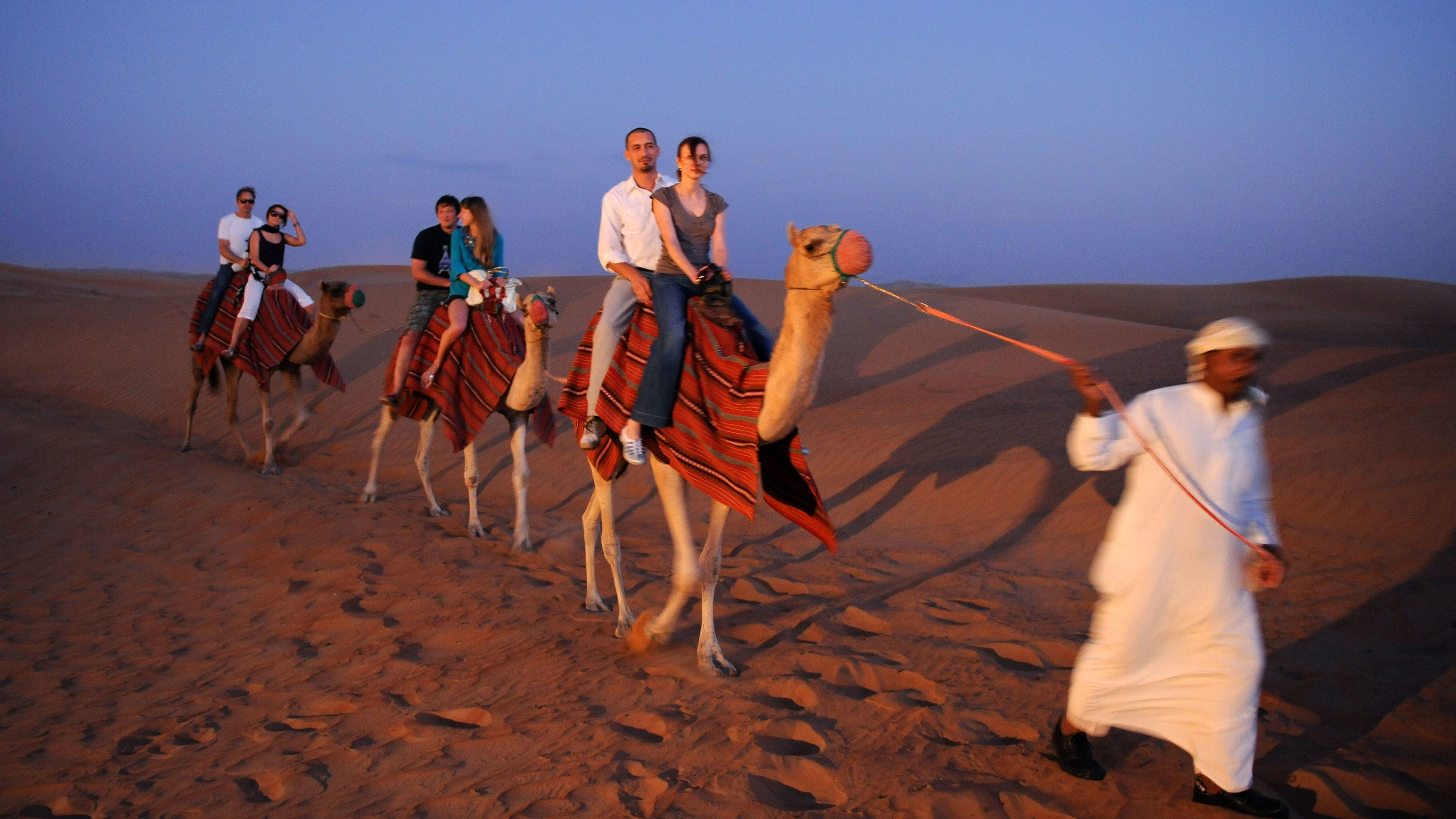 Arabic bedouin leading three camels with couple on them in Dubai
