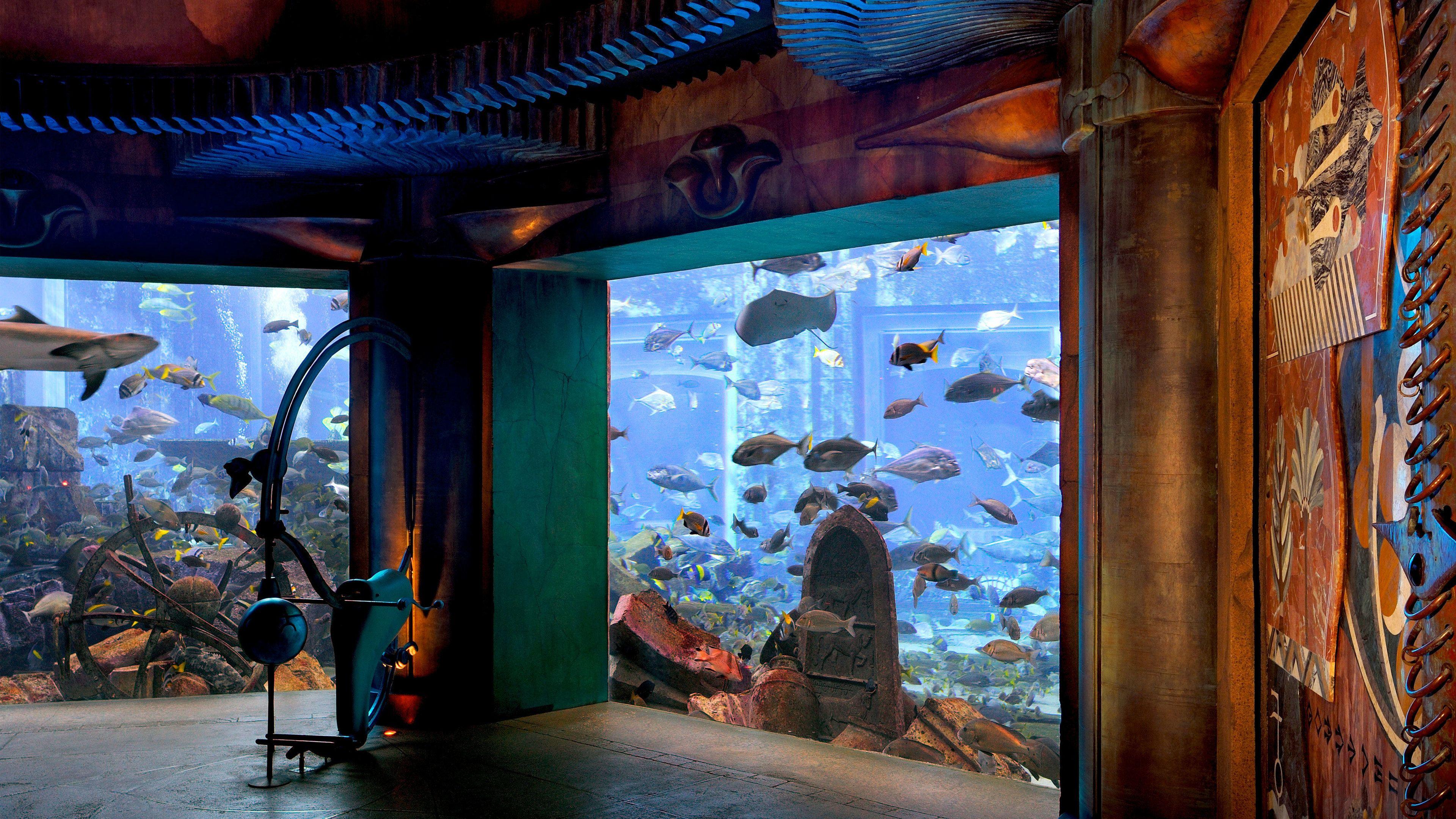 plethora of fish in aquarium at waterpark in Dubai