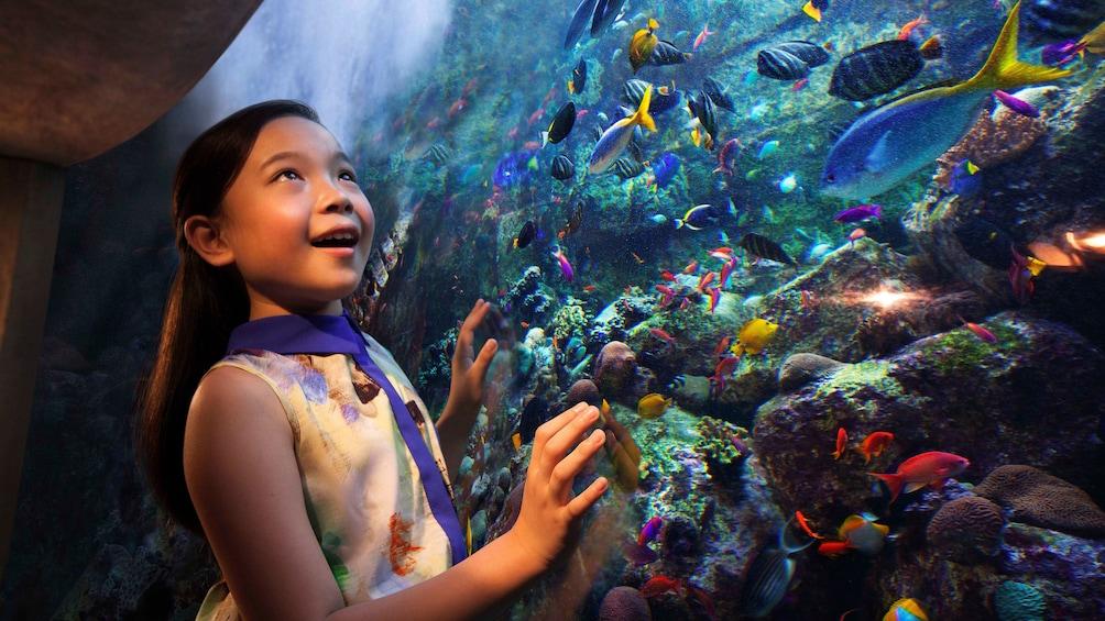 Charger l'élément 2 sur 6. young girls enthralled by fish in giant aquarium in Dubai