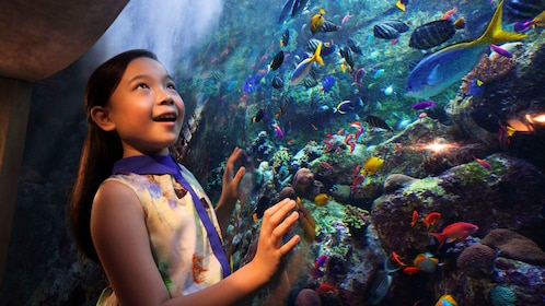 young girls enthralled by fish in giant aquarium in Dubai
