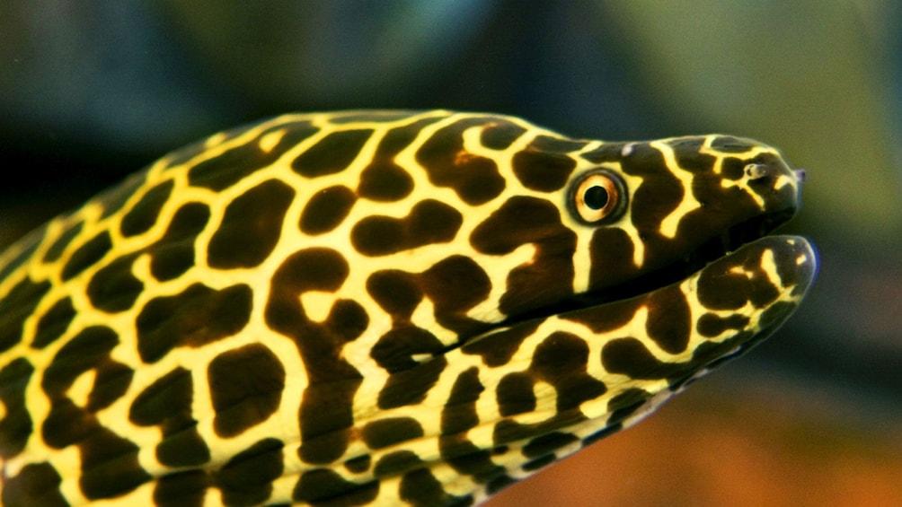Charger l'élément 6 sur 6. close up of eel at hotel Atlantis aquarium in Dubai