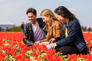 Carregar foto 1 de 10. Skip-the-Line Guided Tour: Keukenhof Gardens & Tulip Farm