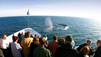 Whale & Dolphin Watching Expedition