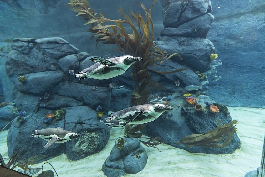 Indlæs billede 5 af 9. San Diego Zoo