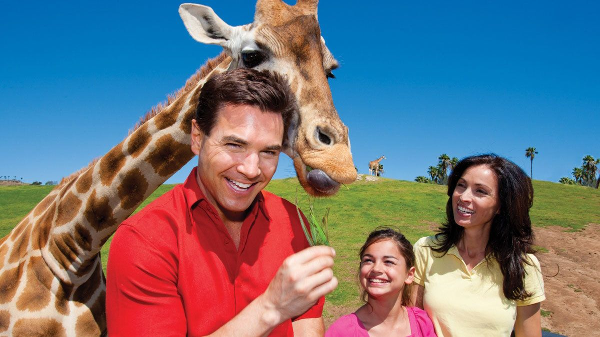 Family feeding a giraffe at the San Diego Zoo