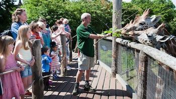 Apri foto 8 di 8. Guide feeding giraffes at the ZSL London Zoo