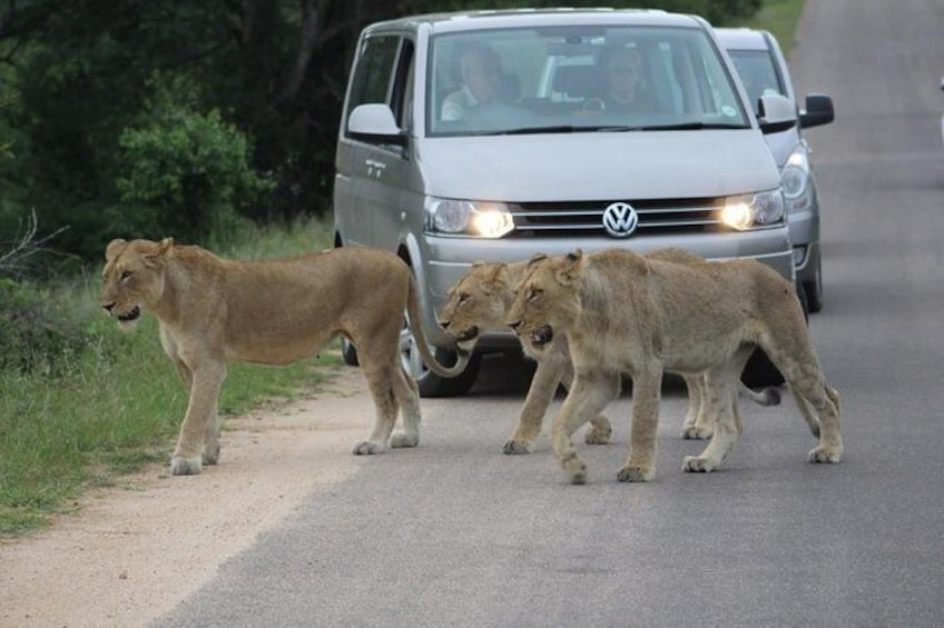 Show item 2 of 10. 4 Day Safari to Kruger National Park from Johannesburg