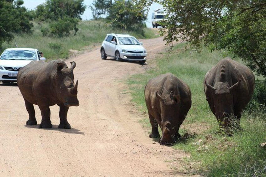 Show item 10 of 10. 4 Day Safari to Kruger National Park from Johannesburg