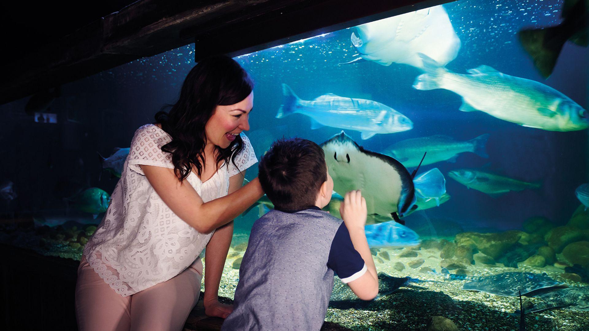 London SEA LIFE Aquarium Tickets