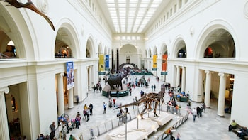 Show item 3 of 7. view from second level at the field museum in chicago