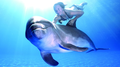 woman diving with a dolphin in Los Cabos