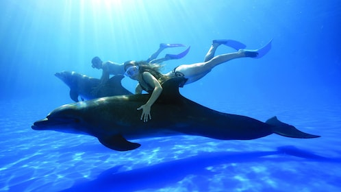 two people diving with dolphins underway in Los Cabos