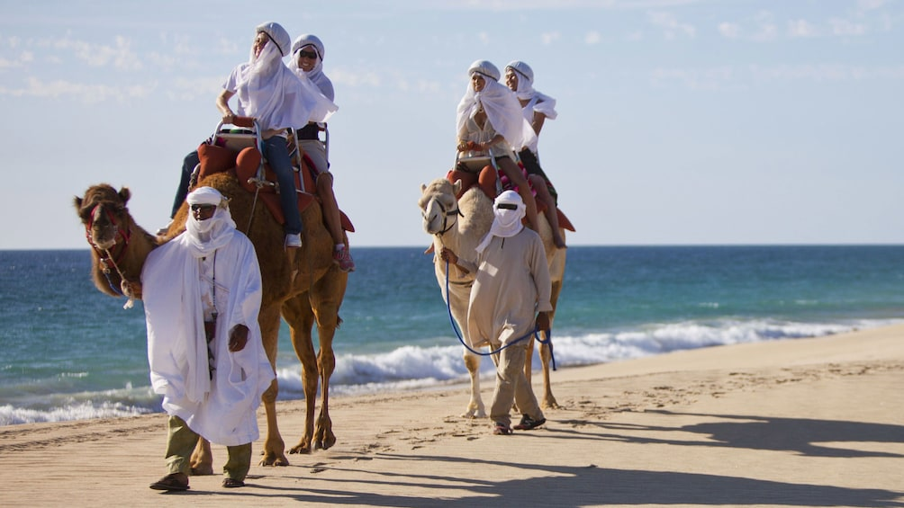 Show item 3 of 10. men leading camels and riders along beach in Los Cabos
