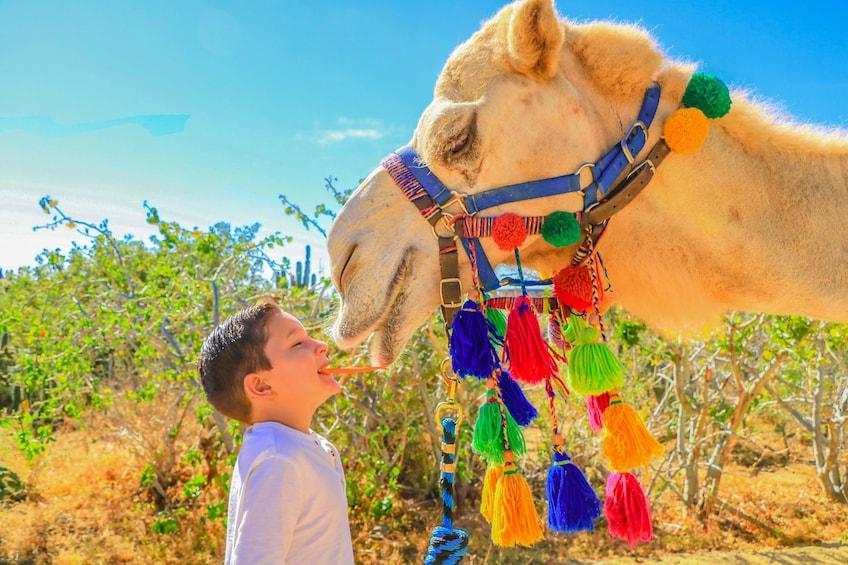 Outback Camel Safari and Eco-Farm