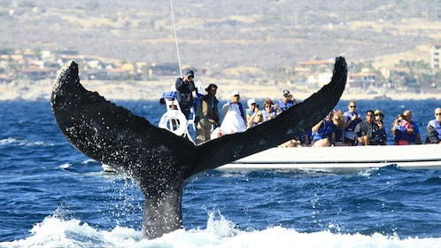 Boating group watching whales in Los Cabos