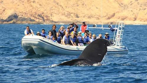Tour group in a boat watching whales in Los Cabos