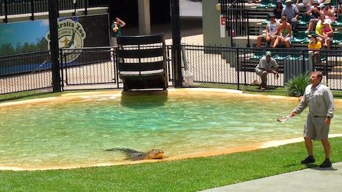 crocodile wrangler at the zoo in Australia