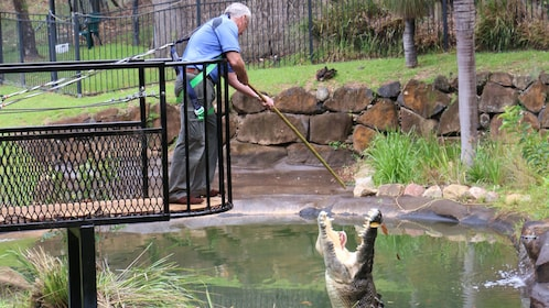 Man feeding crocodile at Currumbin Wildlife Sanctuary in Gold Coast
