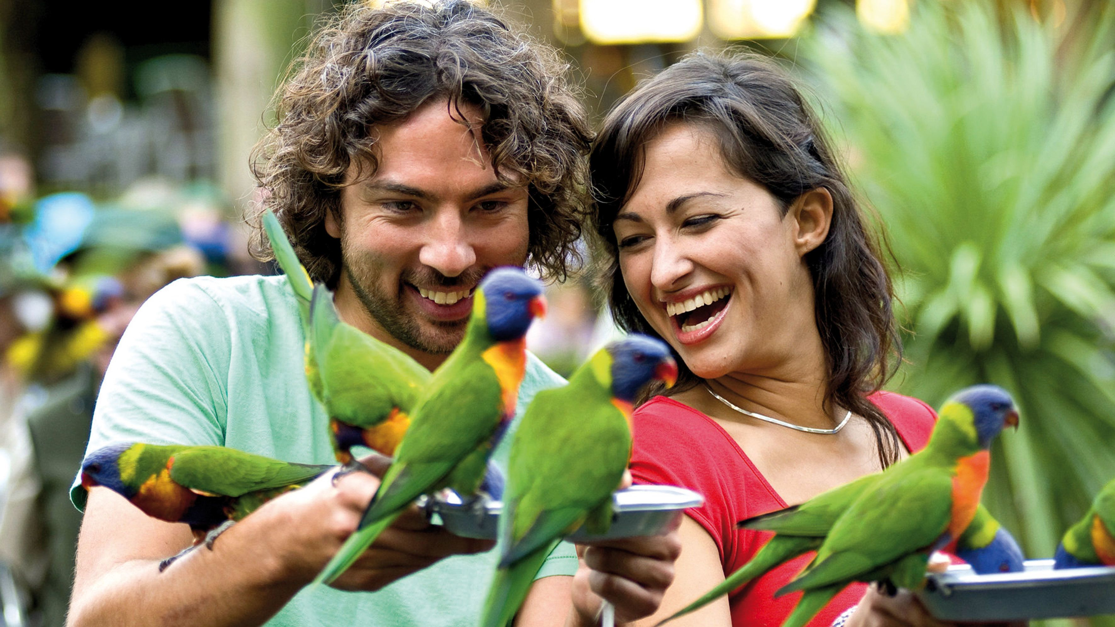Currumbin Wildlife Sanctuary Tickets