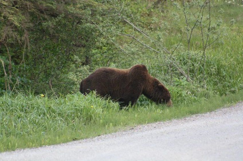 Show item 1 of 2. Bear and Wildlife Excursion