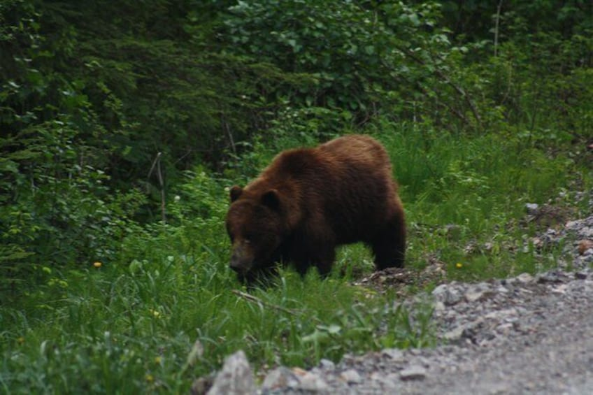 Show item 2 of 2. Bear and Wildlife Excursion