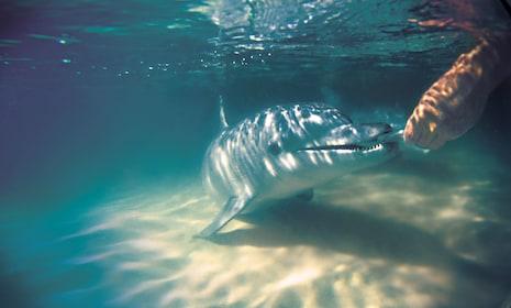 dolphin_feeding_2.jpg