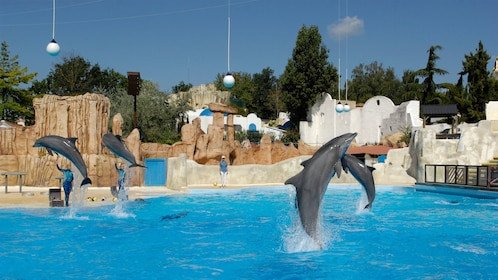 Dolphin show at Parc Asterix in Paris.
