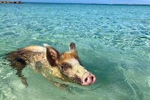 All Inclusive Boat Tour to the Famous Pink Sands Beach & Eleuthera Swimming...