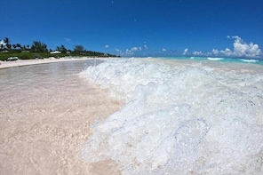 All Inclusive Boat Tour to the Eleuthera Swimming Pigs & Famous Pink Sands ...