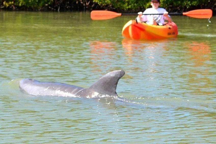 Show item 2 of 6. Guided Kayak Tour- Manatee and Dolphin sightings